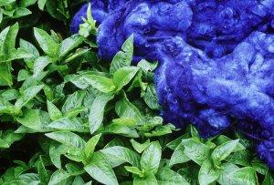 Indigo sử dụng trong nhuộm vải, sợi bông